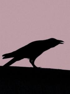 ravens_02